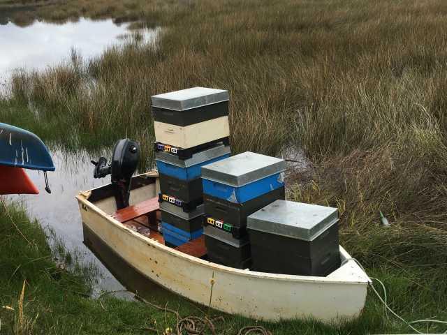 Great Barrier Active Honey - Manuka Honey